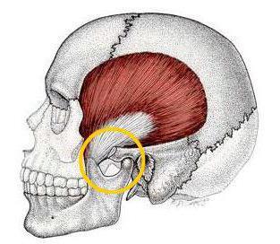 az íves ízületek artrózisának kezdeti jelei az ízületek fájnak az egész testemben