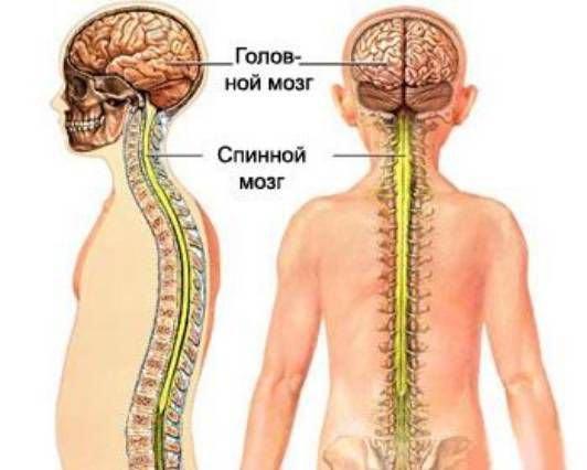 Внутренние органы со спины. Внутренние органы на теле человека. Акупунктурные точки