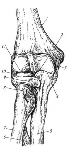 tartós fájdalom és ízületek merevsége a kis ízületek deformáló artrózisa