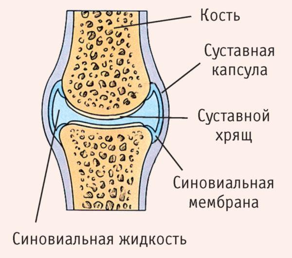 a térdízület kötőelemeinek és meniszciáinak károsodása)